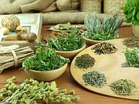 Выращивание пряных растений дома