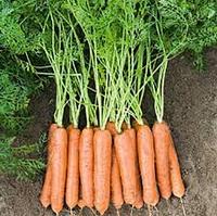 Семена моркови Навал F1 1 млн.семян