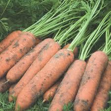 Семена моркови Ньюкасл F1 100000 семян