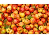 Яблоки зимние
