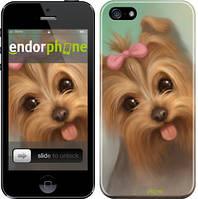 """Чехол на iPhone 5 Нарисованный йоркширский терьер """"928c-18"""""""