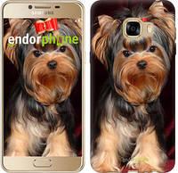 """Чехол на Samsung Galaxy C5 C5000 Йоркширский терьер """"929u-301"""""""
