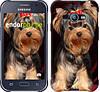 """Чехол на Samsung Galaxy J1 Ace J110H Йоркширский терьер """"929u-215"""""""