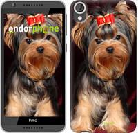 """Чехол на HTC Desire 820 Йоркширский терьер """"929u-133"""""""