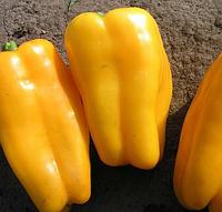 Семена Перец сладкий Джемини F1 поштучно 20 семян Nunhems, фото 1
