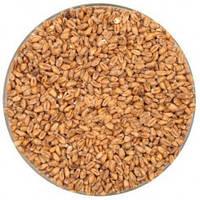 """Солод пивоваренный пшеничный Weyermann Wheat Malt """"Pale"""" (Пшеничный светлый) 50кг"""