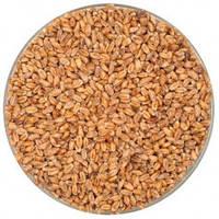 Солод пивоваренный пшеничный темный Weyermann Wheat Dark 50кг