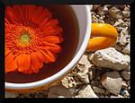 Витаминные чаи - лучшее натуральное средство от гиповитаминоза и авитаминоза!
