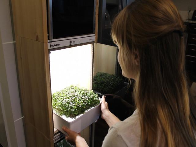 Наноферма для выращивания овощей дома