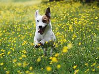 Борьба с блохами, клещами … — ветеринарные препараты……