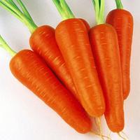Семена моркови Абликсо  F1 (Ablixo F1). Упаковка 1 000 000 семян
