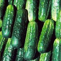 Семена огурца Потомак F1 (Potomak F1). Упаковка 1 000 семян. Производитель Seminis.