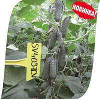 Семена огурца СВ 4097 ЦВ F1 (SV 4097 CV  F1). Упаковка 1 000 семян.