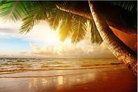 Кафель панно Пальма Закат - фотоплитка панно,  плитка 20х30см.