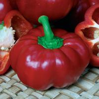 Семена перца сладкого Притавит F1 (Pritavit F1). Упаковка 500 семян. Seminis