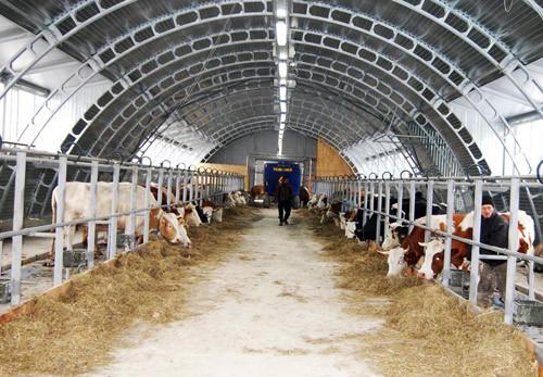 Один день из жизни коровы на роботизированной ферме