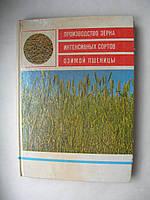 Производство зерна интенсивных сортов озимой пшеницы