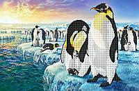 Схема для вышивки бисером Пингвины КМР 3097