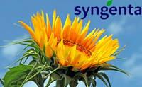 Армони НК гибрид компании Syngenta, семена подсолнечника
