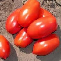 Семена томата Инкас F1 1000 семян детерминантный