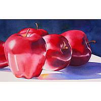 """Картины по номерам без упаковки """"Яблоки"""", 30х50см (КНО2026)"""