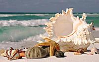 """Набор алмазной вышивки (мозаики) """"Дары моря"""""""