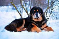 Средства от глистов для собак и щенков