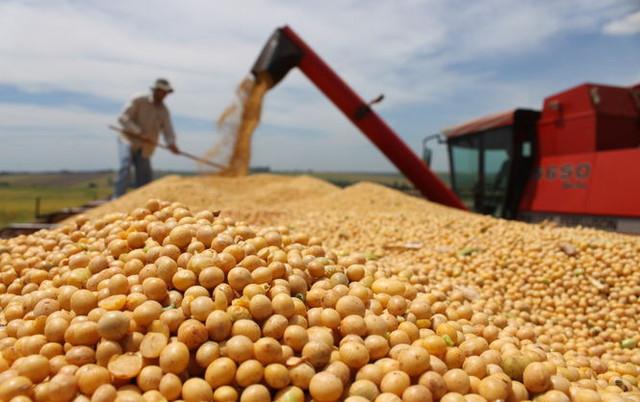 Украинские аграрии сократили площади, но добились рекордного урожая: подтверждение перспективности нишевой культуры