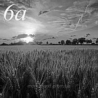 Колосистое поле