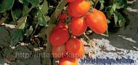 Семена томата Тойото F1 1000 сем. Бейо заден.