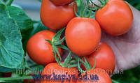 Семена томата Ричи F1 5 гр.Бейо заден.