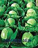 Семена капусты Гермес F1 2500 сем. Семинис.