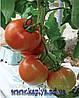Семена томата высокорослого Симба F1 1000 сем. Ларк сидс.