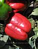 Семена перца Красный Рыцарь F1 500 сем. Семинис.
