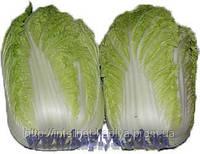 Семена пекинской капусты Марлин F1 1000 сем. Ларк сидс.