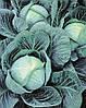 Семена капусты Галакси F1 2500 сем. Семинис.