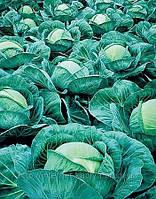 Семена капусты Атрия F1 2500 сем. Семинис.