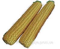 Кукуруза сахарная Рання Насолода F1 50 сем. Ларк Сидс (Lark Seeds)