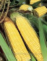 Семена кукурузы Трофи F1 5000 сем. Семинис.