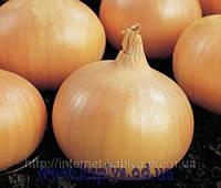 Семена лука Сафран F1 250000 сем. Бейо заден.