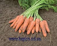 Семена моркови Карини F1 50гр. Бейо заден.
