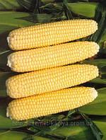 Семена кукуруза Челенжер F1 5000 сем. Семинис.