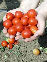Семена томата Церазо 1000 сем.Семинис.