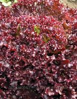 Семена салата Люберон 10 грамм.Семинис.