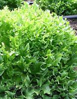 Семена салата Фриллис 10 грамм.Семинис.