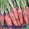 Семена моркови Санта Круз F1 1 000 000 сем. Семинис.