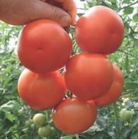 Семена томата Лилос F1 1000 сем. Рийк цваан.