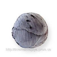 Семена капусты калиброванное Рексома F1 2500сем. Рийк цваан.