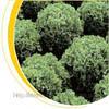 Семена салата Фристина 5г.Nickerson-Zwaan