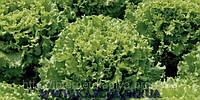 Семена салата Имейджинейшнл 1000 сем.Рийк цваан.